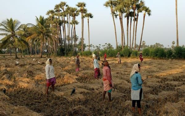 コメの収穫をする農家の女性たち。インドでも農業労働者の確保は難しくなっている(16年11月、アンドラプラデシュ州)=筆者撮影