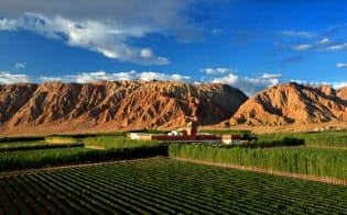 雄大な風景が広がるゴビ砂漠にある中国の注目ワイナリー、天塞酒庄(テンサイヴィンヤード)