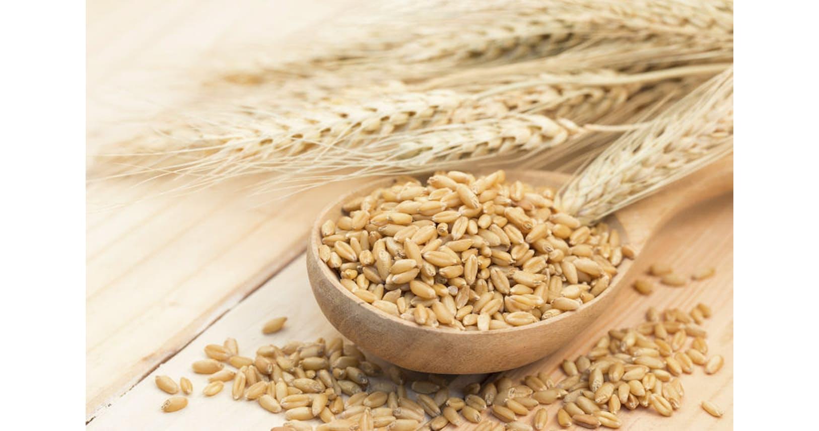 英語 大麦 「小麦」と「大麦」の違いは?