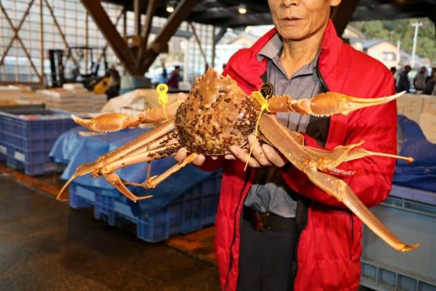 日本海カニ産地、ブランド磨く 最高ランクやギネス