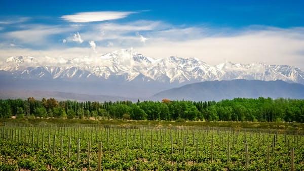南米最高峰の麓 アルゼンチンのワイナリーを巡る旅