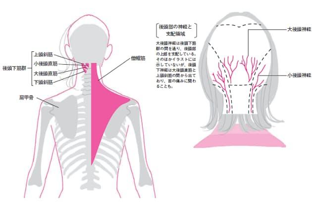 首の付け根の筋肉の凝りが頭や目の神経を圧迫する  後頭下筋群は、小後頭直筋(しょうこうとうちょっきん)、大後頭直筋(だいこうとうちょっきん)、上頭斜筋(じょうとうしゃきん)、下頭斜筋(かとうしゃきん)という四つの筋肉で立体的に形成されている。悪い姿勢によってこれらの筋肉群が硬直するとその表面を覆っている僧帽筋(そうぼうきん)も硬直し、うなじから肩全体がぱんぱんに凝る。後頭下筋群がある場所には頭や目、耳の領域を支配する神経が密集しているため、凝った筋肉に圧迫されるとズキズキとした頭痛、目のかすみ、耳鳴りなども併発しやすい。