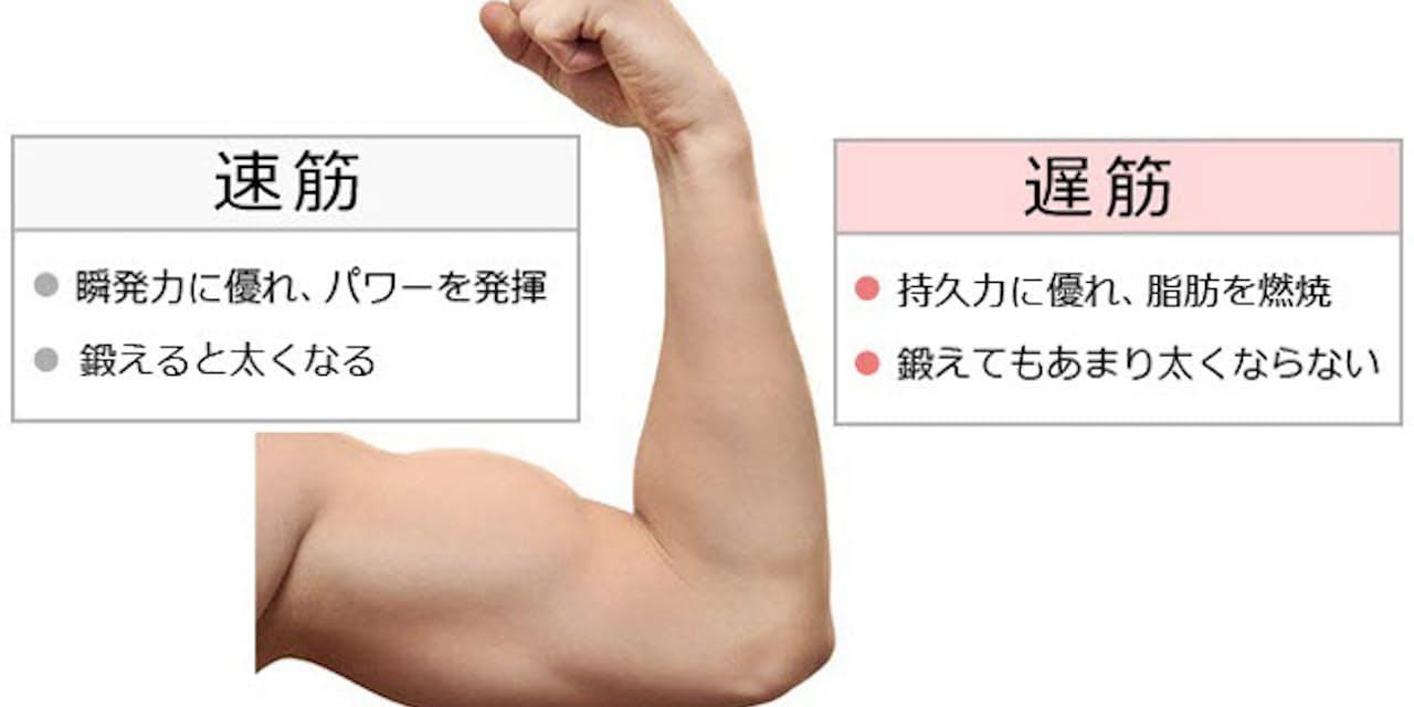転ばない体づくり 鍛える筋肉は速筋と遅筋どっち?|NIKKEI STYLE