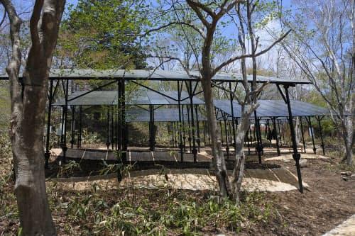 木を切らず木立の間に太陽光パネルを設置した(出所:日経BP)