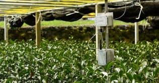 福岡県農林業総合試験場八女分場で環境・生育データの取得に用いた例(出所:ソラコム)