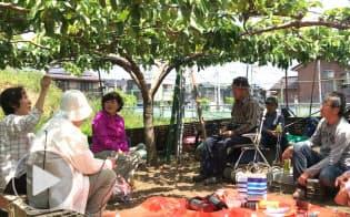 稲城の梨の物語 農家へのインタビューまとめる