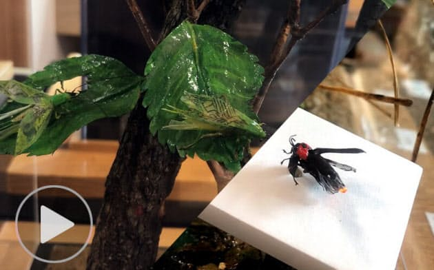 ティッシュペーパーで作った昆虫たち