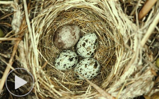 卵のある巣を求めて野へ山へ、鳥類研究の楽しみ