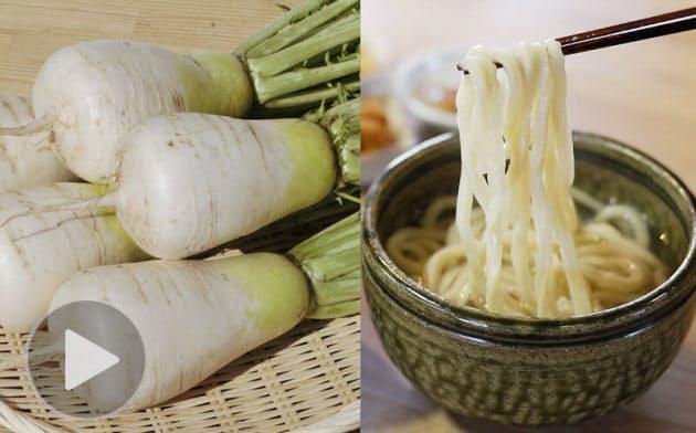 ねずみ大根、信州坂城の伝統野菜を守る