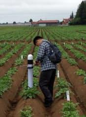 センサーを埋め込み土壌などの状態を見ながらジャガイモを栽培する北海道農業研究センター(北海道芽室町の実験圃場)
