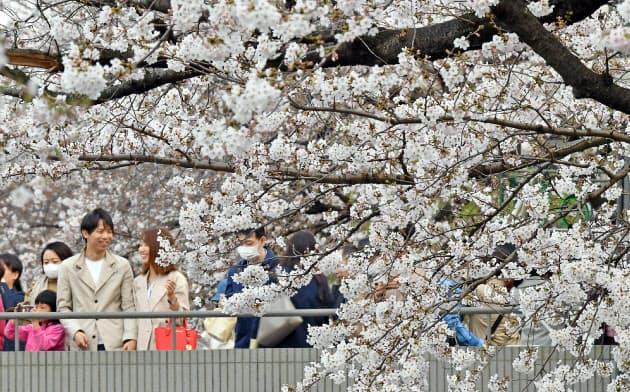 東京の桜 満開に