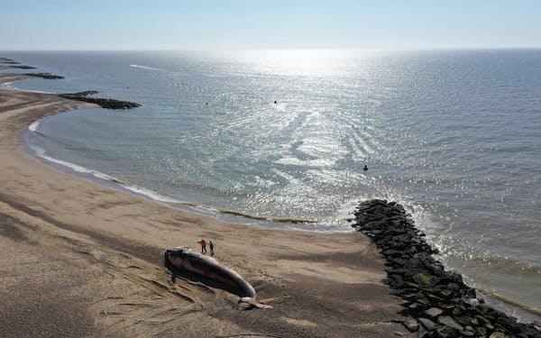 2020年5月30日、英国イングランド東海岸の町ホーランド・オン・シーの砂浜に打ちあがったナガスクジラ。クジラの座礁や漂着は世界的な現象だが、北海の浅い海岸でとりわけ多くみられる(PHOTOGRAPH BY ROB DEAVILLE, CSIP-ZSL)