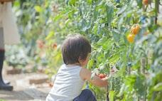 有機農業、農水省なぜ推進? SDGsの流れが後押し
