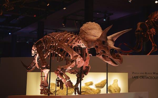 トリケラトプスの化石「レイン」は日本初公開。期間中無休だが土日祝日と8月7~15日は事前予約・日時指定入場制になる
