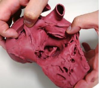 図3 クロスエフェクトがCTスキャンデータを基に造った軟質心臓モデル