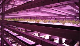 図1 世界初のグリーンクロックスを採用した植物工場(写真:日経BPクリーンテック研究所、以下同じ)