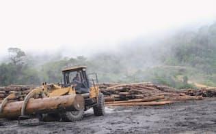 違法材の輸入規制に新法。写真は違法伐採が指摘されてきたマレーシアの伐採会社の林内貯木場(写真:Global Witness)