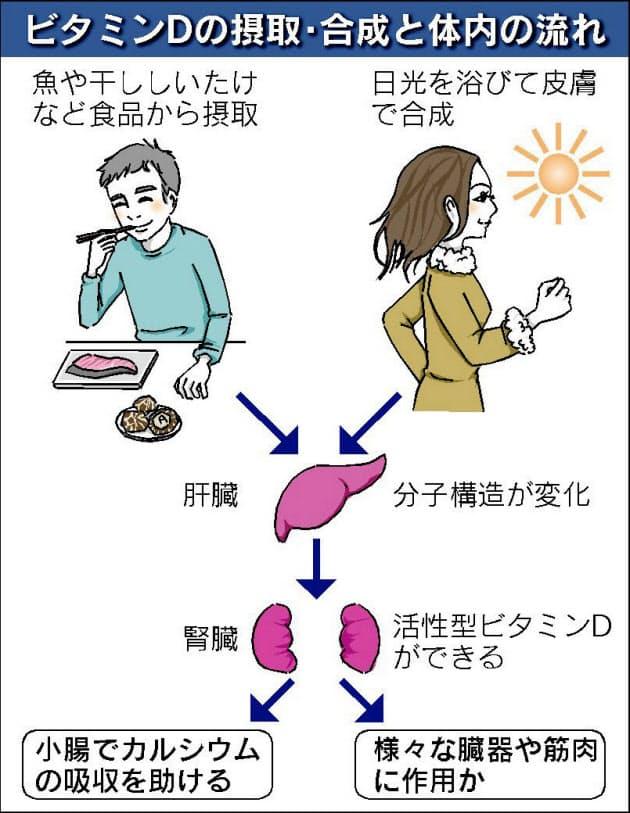 ビタミン d 不足 症状