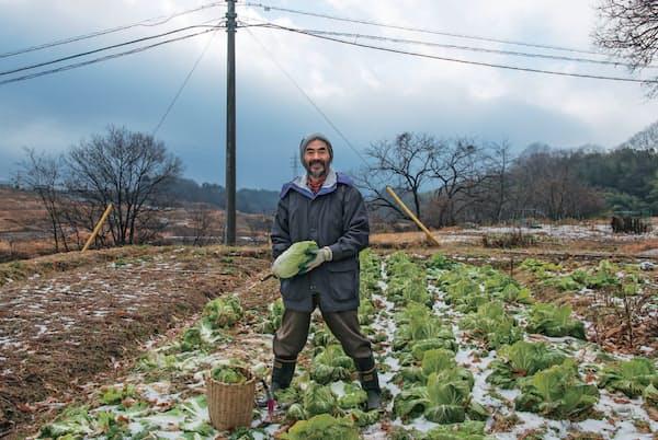 「学びの会」の実習地は中央自動車道長坂インターから約2キロメートルの場所。毎年2月中旬から12月初めまで自然農の実践を行っている。初雪の後、白菜を収穫する「学びの会」主宰者の三井和夫さん
