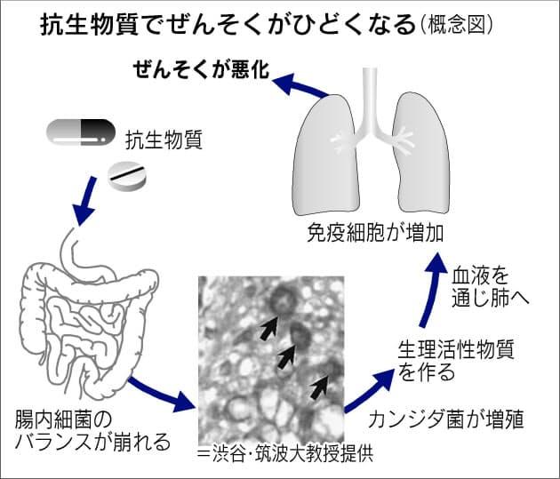 健康維持に大切な腸内細菌 抗生物質や食習慣で乱れ|NIKKEI STYLE