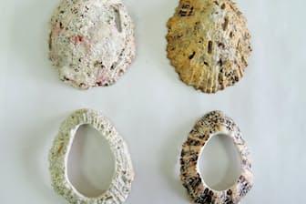 オオツタノハの貝殻と貝輪。左上が御蔵島産で他は種子島産。研磨すると右下のように2色の放射状の模様が現れる。(忍澤成視氏提供)