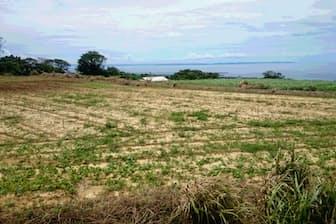 城久遺跡群で見つかった12世紀の製鉄炉跡は大きな衝撃を与えた。中国系、朝鮮半島系、日本本土系など様々な種類で膨大な量の遺物が出た大ウフ遺跡。奄美大島北部を間近に望む