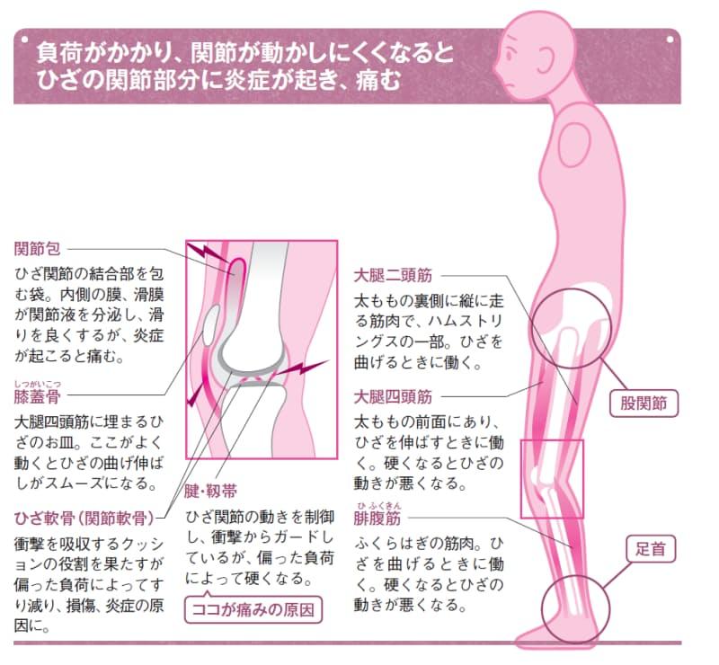 膝 が 痛い 筋 トレ