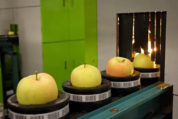 光センサーで糖度を測定する(青森県の選果場)