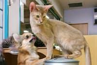ペットの人気は飼い犬から飼い猫へとシフトしている