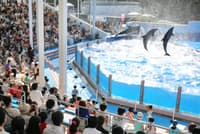「ドルフィンスタジアム」ではイルカのショーが見学できる(新潟市の新潟市水族館「マリンピア日本海」)