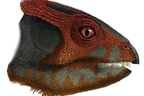 中国で新たに発見された角竜フアリアンケラトプス・ウカイワネンシス(Hualianceratops wucaiwanensis)の想像図(2015PORTIASLOANROLLINGS)
