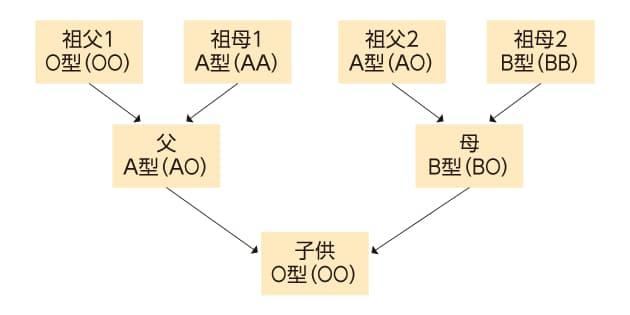 B 型 の 型 と 子供 a