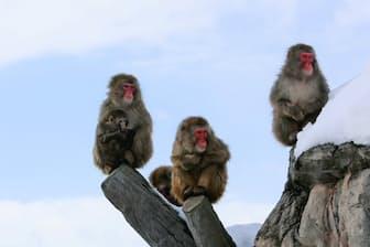 日本最北の旭山動物園 マイナス20度になることもある(撮影・桜井省司、提供:株式会社LEGiON)