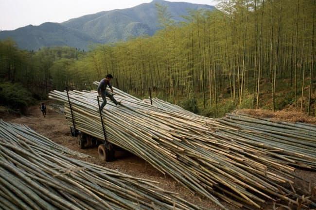 伐採した竹を運ぶ労働者たち。中国、安吉県の林で撮影。(PHOTOGRAPH BY FRITZ HOFFMAN, NATIONAL GEOGRAPHIC)