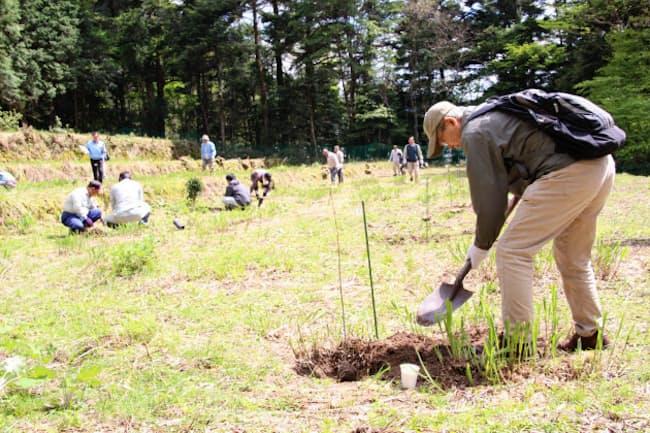 耕作放棄地にセンダンの苗木を植える地域住民ら(今年4月、兵庫県宍粟市)