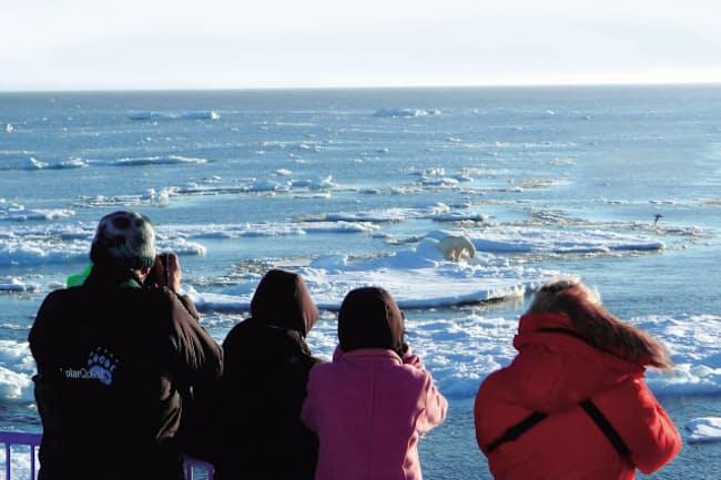 クルーズから眺める北極圏のシロクマ