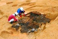 カマド塚の調査は、屋根材とみられる大量の炭の除去から始まった(三重県埋蔵文化財センター提供)