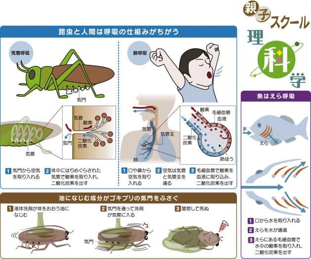 ゴキブリ 中 性 洗剤 ゴキブリには洗剤が効く!食器用洗剤で退治する4つのコツ【プロ監修】...