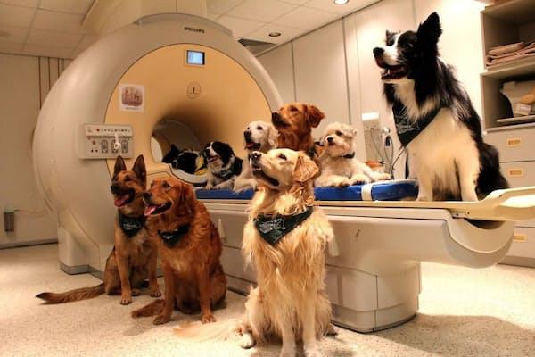 fMRI装置の中で動かないよう、イヌたちをしつけるには数カ月を要した。(PHOTOGRAPH BY ENIKÖ KUBINYI)
