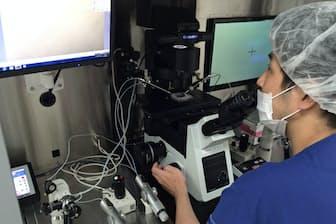 精子が映る画面を見つめる胚培養士の渡辺英明さん