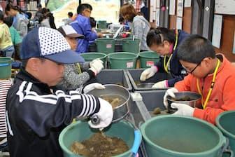 土砂をふるいにかけ、夢中で化石を探す(埼玉県東松山市)