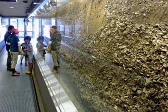 高さ約2メートルの貝塚の断面を間近に見ることができる