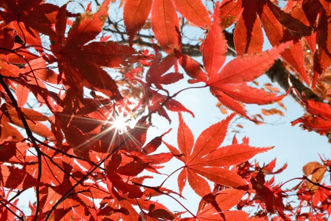 鮮やかな紅葉の季節となった