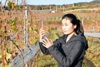 中央葡萄酒の三澤彩奈さん(山梨県北杜市の明野・ミサワワイナリー)