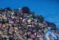 グリーンピースの船「マイ・エスペランサ」に搭載された潜水艇が撮影した「アマゾン礁」の写真。(PHOTOGRAPH BY GREENPEACE)