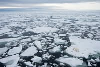 ノルウェーのスバールバル諸島で、みずからが置かれた状況を考えているホッキョクグマ。ここ30年で、北極の氷は厚さ、範囲ともに減り続けている。(PHOTOGRAPH BY RALPH LEE HOPKINS, NATIONAL GEOGRAPHIC CREATIVE)