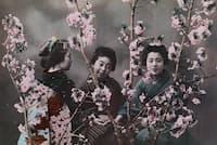 1918年前後の日本。桜の花越しにポーズを取る女性たち。撮影したエライザ・シドモアは、ワシントンDCに桜を植えることを最初に提案した人物。(PHOTOGRAPH BY ELIZA R. SCIDMORE, NATIONAL GEOGRAPHIC)