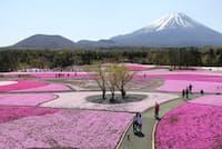 富士山と芝桜のコントラストは外国人に絶大な人気 (写真:japan-guide.com)