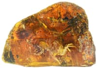 小さな琥珀(約7.5センチ)に閉じ込められた9900万年前のひな鳥。CTスキャンで調べた結果、ミャンマー産の琥珀の中から発見されたものとしては、最も完全な状態を維持した化石であることがわかった(PHOTOGRAPH BY MING BAI, CHINESE ACADEMY OF SCIENCES)
