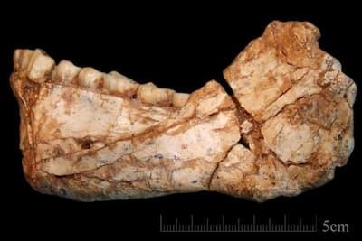 モロッコのジェベル・イルード遺跡で発見された人類の成体の下顎骨の化石。現生人類とよく似た歯が見られる。(PHOTOGRAPH BY JEAN-JACQUES HUBLIN, MPI-EVA, LEIPZIG)